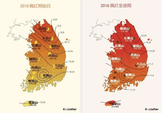 korea-maple-beauty-01s